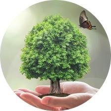 Cuidado y apoyo al medio ambiente